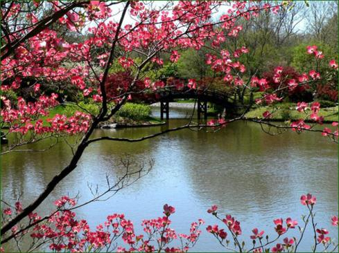paysage-japon.jpg